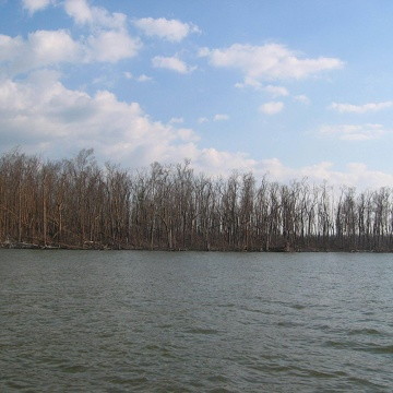 Mangrove forest at the mouth of Shark River damaged by Hurricane Wilma