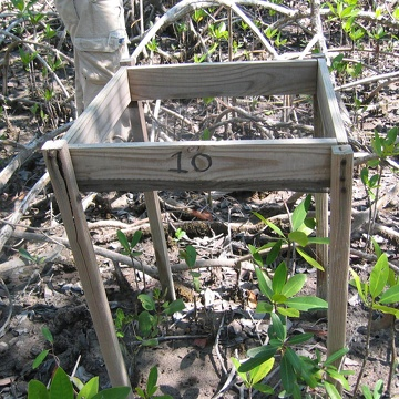 Litter basket installed in a mangrove forest at SRS-5 in Shark River to estimate litterfall productivity