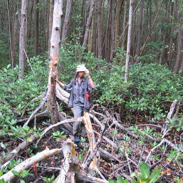 Sharon Ewe sampling seedling regeneration in a forest gap at SRS-6