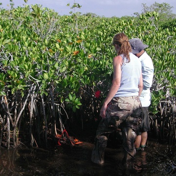 Left to right: Nicole Poret and Carlos Coronado-Molina deploying bags to determine decomposition rates of mangrove fine roots at TS/Ph-6b in Taylor Slough