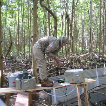 Melissa Romigh setting up autosamplers for a flume study inside a mangrove forest at SRS-6 in Shark River Slough