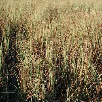 Sawgrass at SRS-1c