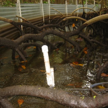 Water sheet flow inside a flume to measures nutrient/sediment fluxes in a mangrove forest at SRS-6