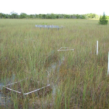 Macrophyte plots at TS/Ph-4 in the C-111 Basin