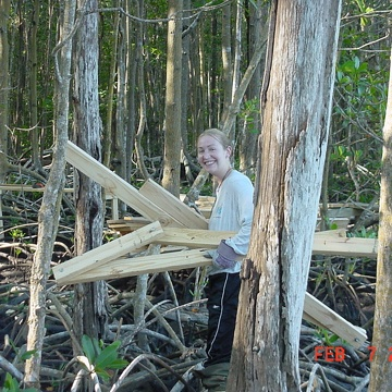 Melissa Romigh carrying wood to construct boardwalk in mangrove forest near SRS-6 in Shark River Slough