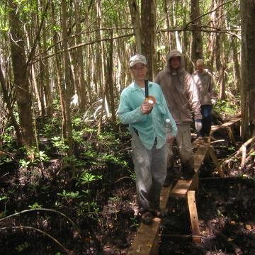 Mike Ross inspecting mangrove forest gaps along boardwalk at SRS-6 in Shark River