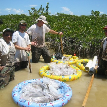 Left to right: Carlos Coronado-Molina, Justin, Dan Bond, and Edward Castaneda retrieving root biomass cores in dwarf mangroves in Taylor Slough