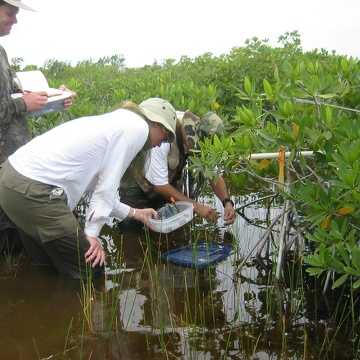 Left to right: Dan Bond, Kim de Mutsert and Edward Castaneda measuring porewater salinity, redox, and hydrogen sulfide in dwarf mangroves at TS/Ph-6b in Taylor Slough