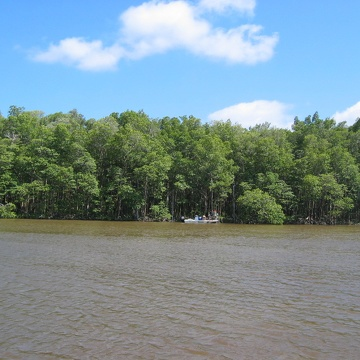 Fringe mangrove forest at SRS-6 in Shark River before Hurricane Wilma