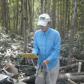 Dr. Price testing groundwater salinity at SRS-6 in Shark River Slough