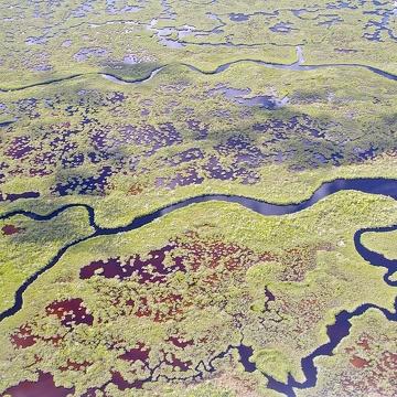 Tributary of Shark River, south of Shark River