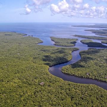 Looking back towards Ponce De Leon Bay, lower Shark River Slough