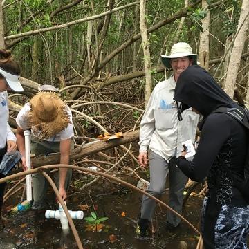 Left to right: Venus Garcia (FIU QBIC Undergraduate), Sean Charles (FIU Ph.D Student), Dr. John Kominoski, and Priscilla Brown (FIU Teach Undergraduate). Sean and Venus are collecting a soil core while Priscilla labels a mangrove leaf sample.