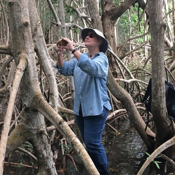 Cathy Laroche (FCE LTER RET, Felix Varela High School) measuring the heights of mangrove trees in Biscayne National Park.