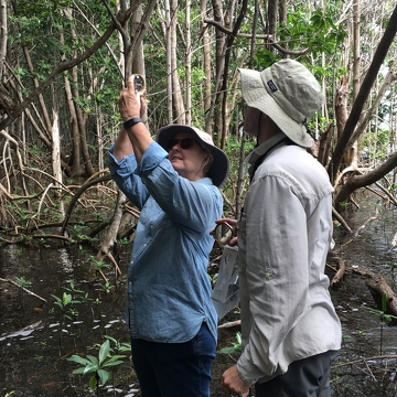 Cathy Laroche (FCE LTER RET, Felix Varela High School) and Dr. John Kominoski measuring the heights of mangrove trees in Biscayne National Park.