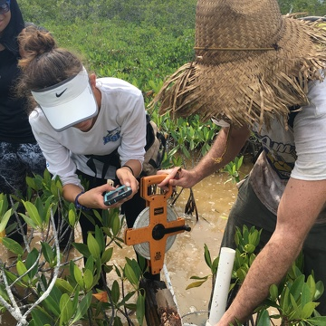 Venus Garcia (FIU QBIC Undergraduate, left) and Sean Charles (FIU Ph.D. student, right) measuring the length of a soil core in Biscayne National Park.