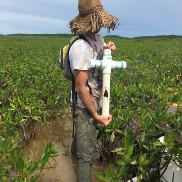 Sean Charles collecting a soil core in dwarf mangroves in Biscayne National Park