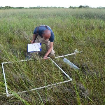 Franco Tobias sampling plants at SRS-3, Shark River Slough