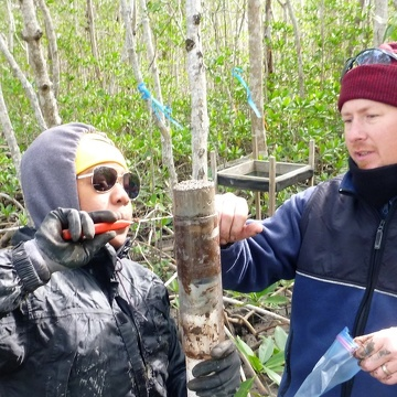 Nia Hurst and Josh Breithaupt extracting a sediment core from the riverine mangrove forest of Shark River