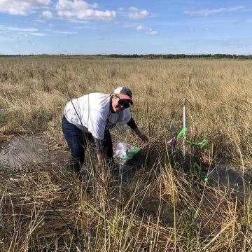 Cristina (Ugarte) Whelan assisting with LTeaER sampling at FCE site TS/Ph-2 in Taylor Slough, Everglades National Park