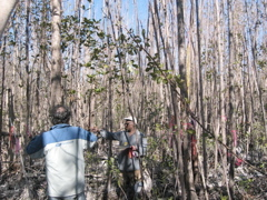Jay Sah measuring tree height in a mangrove forest in Harney River impacted by Hurricane Wilma