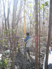 Nilesh Timilsina measuring tree height in a mangrove forest in Harney River impacted by Hurricane Wilma