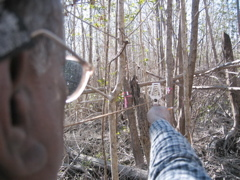 Jay Sah measuring tree density in a mangrove forest at Harney River impacted by Hurricane Wilma