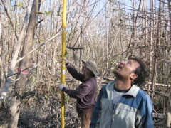 Left to right: Mike Ross and Nilesh Timilsina measuring mangrove tree height at Harney River after Hurricane Wilma