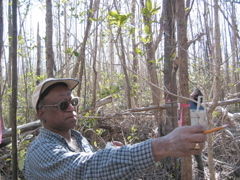 Jay Sah measuring tree density in a mangrove forest impacted by Hurricane Wilma